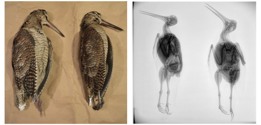 Judy and Sara - Alternative Approaches to Taxidermy