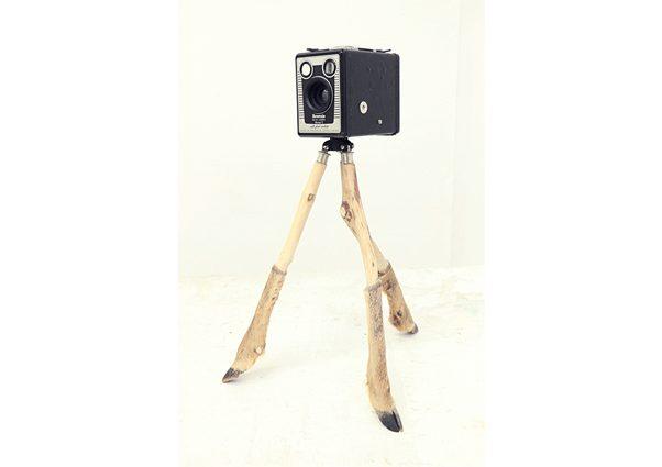 Camera Trap (Version 2)