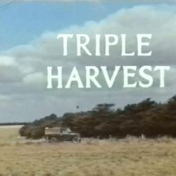 Triple Harvest