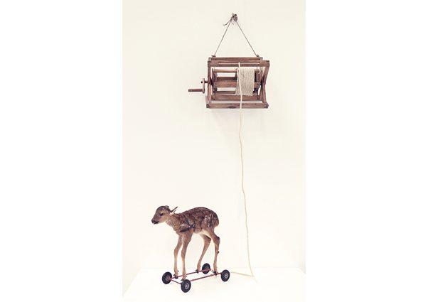Deer Trap
